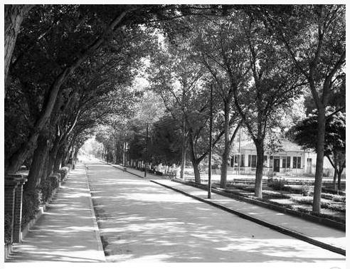 Στο πάρκο του Αλκαζάρ 1960