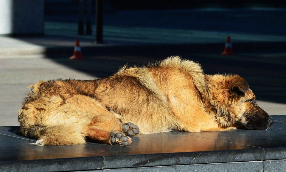 skylakos 960x580 - Παγκόσμια μέρα των ζώων με επίκεντρο τα αδέσποτα!