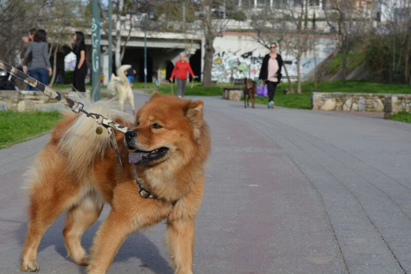 zwa1 - 4 Οκτωβρίου – Παγκόσμια Ημέρα Ζώων:  Μια βόλτα στο Αλκαζάρ!