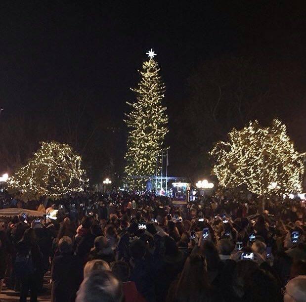 15207945 10202533019443876 785973655 n - Θεσσαλία: Φωταγωγήθηκε το ψηλότερο φυσικό χριστουγεννιάτικο δέντρο!