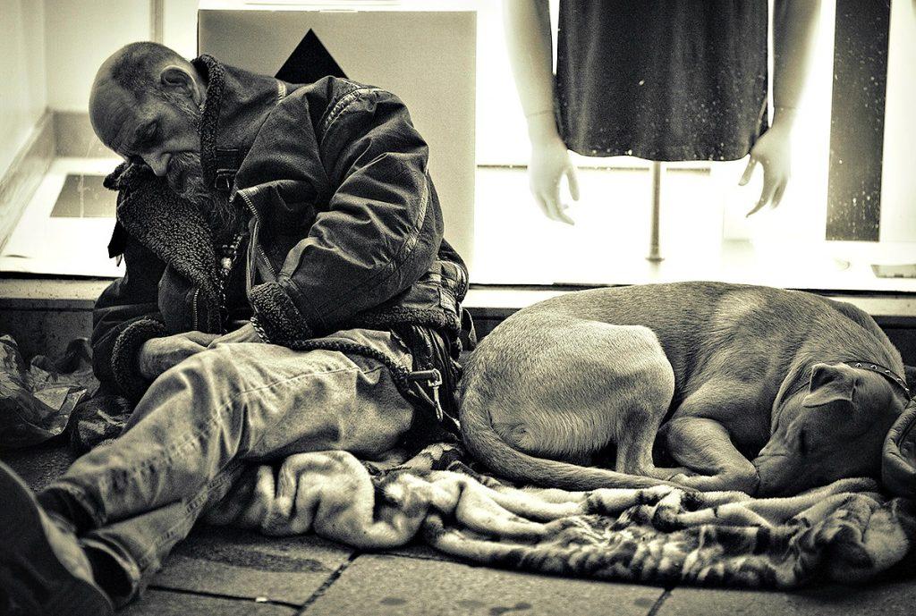 is dog   by fbuk 1024x689 - Μια διαφορετική Πρωτοχρονιά στη Λάρισα