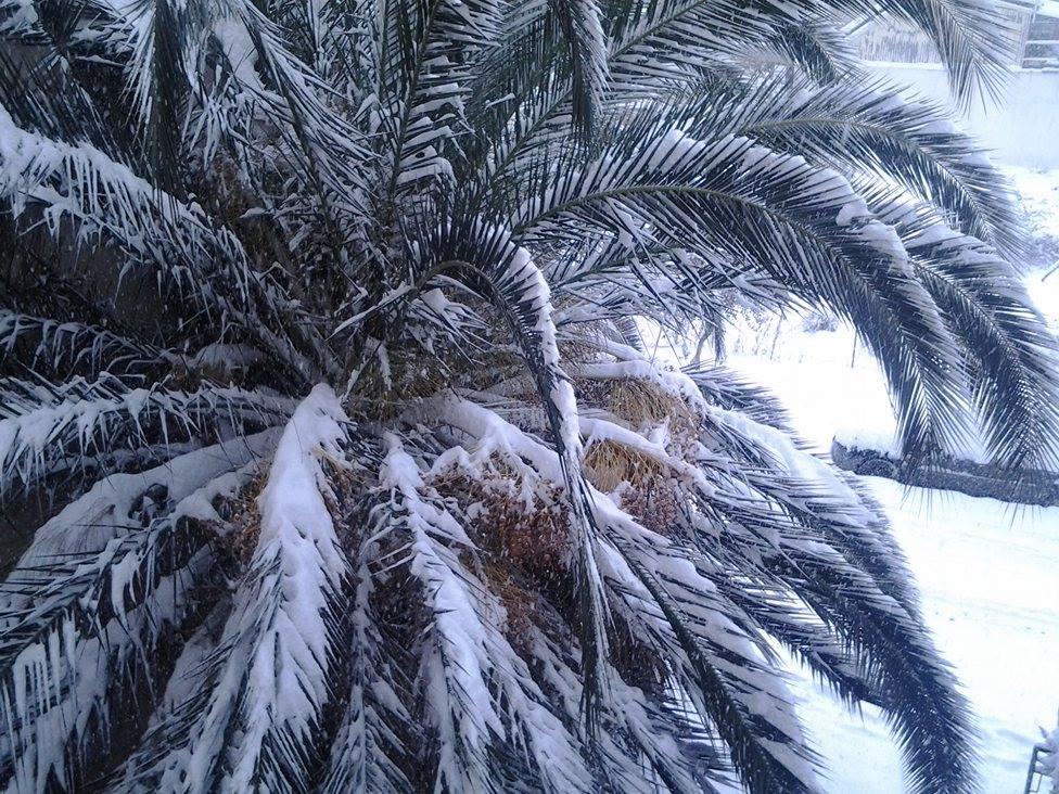 15991669 132151317287441 861794632 o - ΜΑΓΙΚΕΣ ΕΙΚΟΝΕΣ ΣΤΗ ΛΑΡΙΣΑ: Το χιόνι άγγιξε τα 30 εκατοστά!
