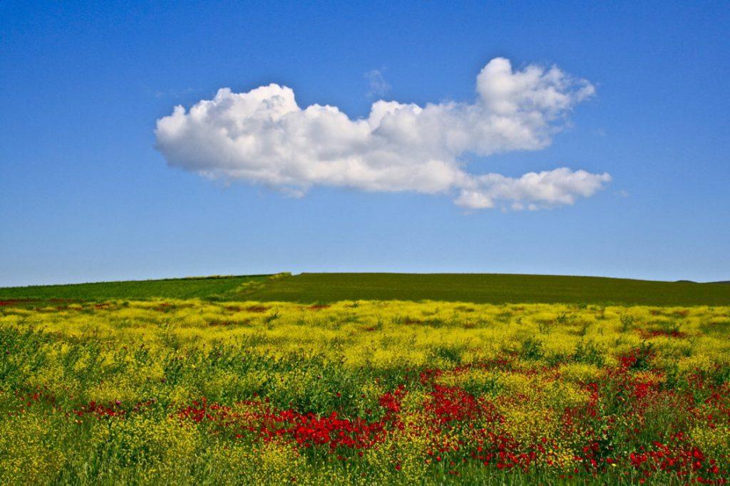 991180 rsz img 2648 1024x682 - Τα χρώματα του Θεσσαλικού κάμπου μέσα από 17 φωτογραφίες