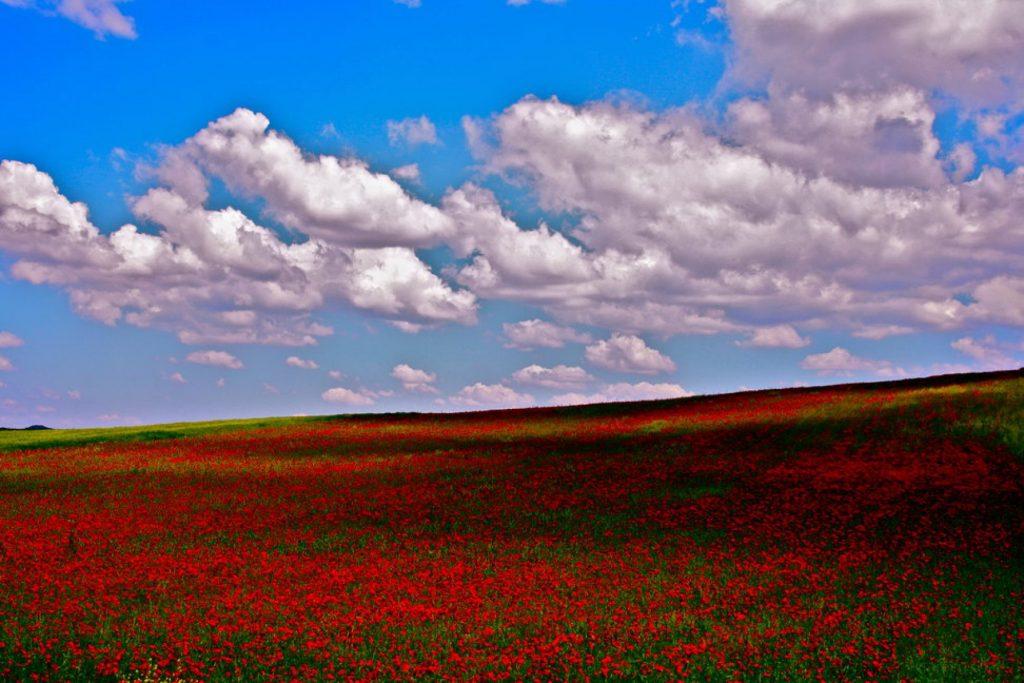991181 rsz img 2664 1024x683 - Τα χρώματα του Θεσσαλικού κάμπου μέσα από 17 φωτογραφίες