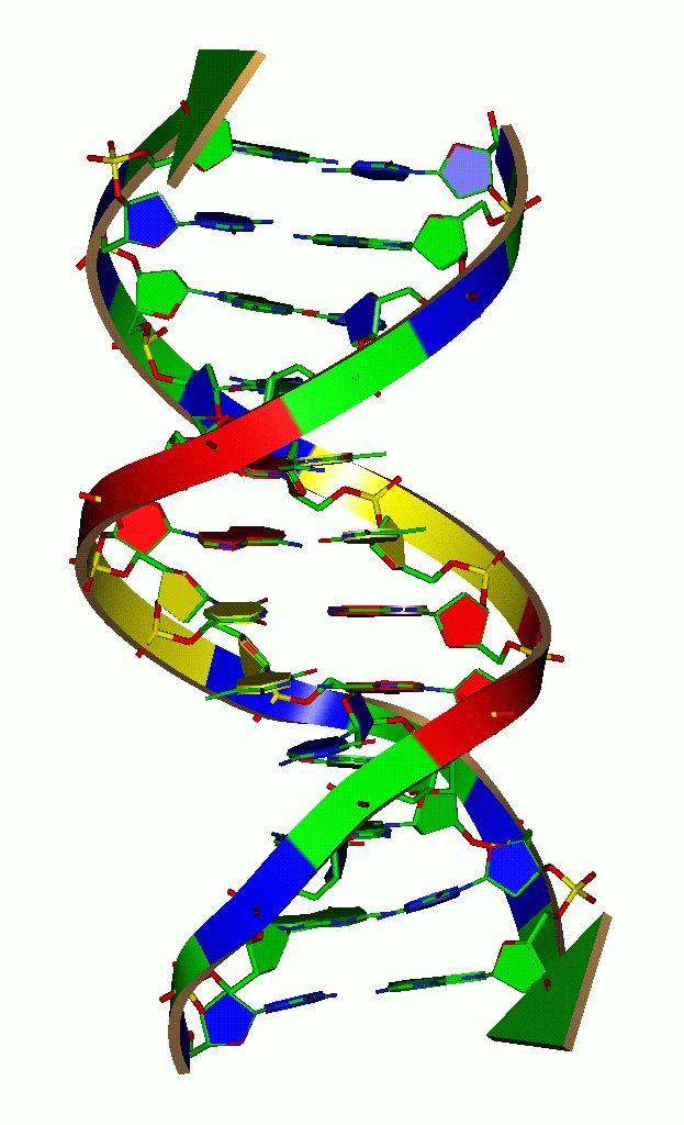 dna figure 623x1024 - «Η συμβολή των μοριακών επιστημών στην υγεία»