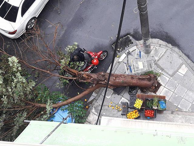 20158170 1594506063906480 705802798 n - ΤΩΡΑ: Πτώση δέντρου στο κέντρο της Λάρισας (ΦΩΤΟ)