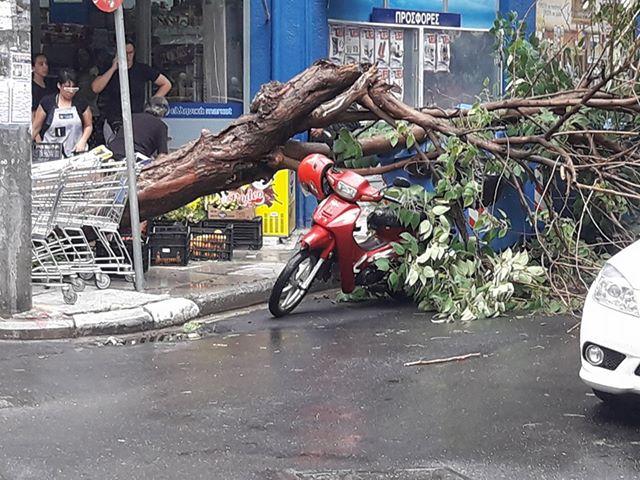 20158223 1594508137239606 689547969 n - ΤΩΡΑ: Πτώση δέντρου στο κέντρο της Λάρισας (ΦΩΤΟ)