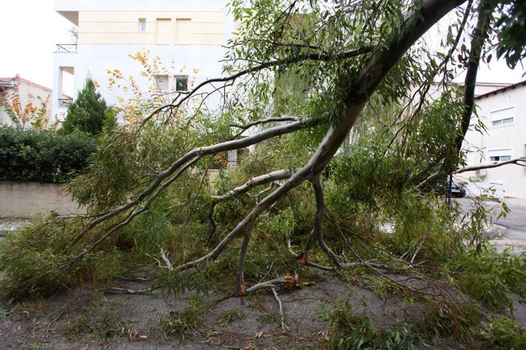 ptwsi dendrwn 1024x683 - Έπεσαν δέντρα στο κέντρο της Λάρισας από το χθεσινό μπουρίνι