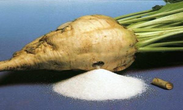 Τεύτλα - Πληρωμές στην παραγωγή σακχαρότευτλων