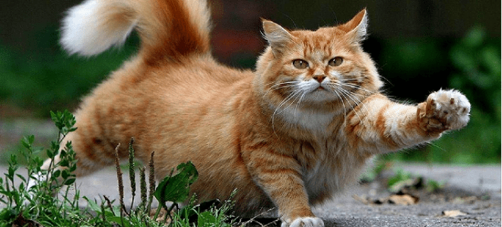 cat 660 10 - Κρήτη| 9χρονο παιδί μολύνθηκε σοβαρά  από γάτα