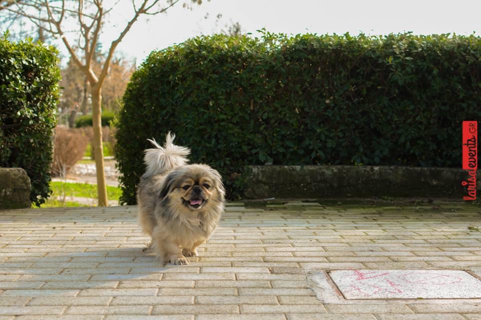 12804205 10207481467329151 1910307303 n - Αυτό είναι το καλύτερο μέρος στη Λάρισα για βόλτα με τον σκύλο σου