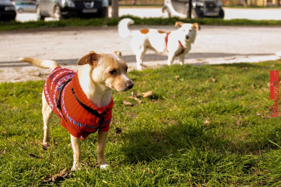 12804354 10207481467529156 1945965998 n - Αυτό είναι το καλύτερο μέρος στη Λάρισα για βόλτα με τον σκύλο σου