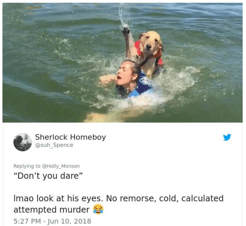 skylos twitter - Σκύλος επιχειρεί να πνίξει το αφεντικό του και γίνεται viral