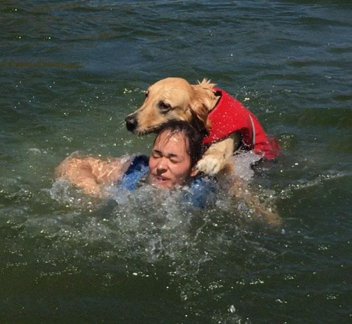 skylos1 - Σκύλος επιχειρεί να πνίξει το αφεντικό του και γίνεται viral