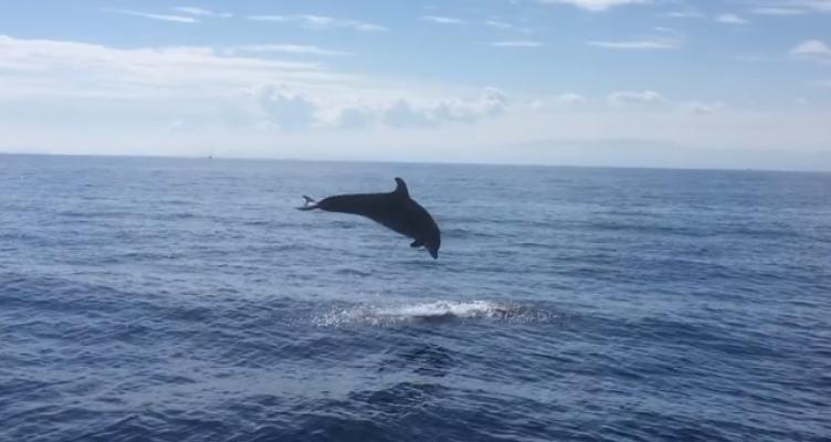 Σεξ με δελφίνι βίντεο