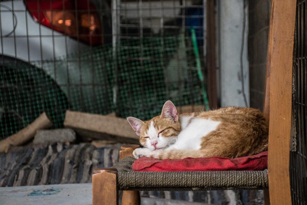 2da4eccde5c4 «Η εγκατάλειψη αλλά και η παθητική κακοποίηση ζώων είναι τα πιο συχνά  φαινόμενα